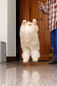 fatcat jump