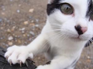cat-11221_640