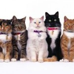 Pawbo Wi-Fi Pet Camera & Treat Dispenser – Full Review