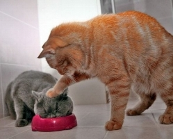 large_Eat_Cat_Eat_Funny_Picture_59479