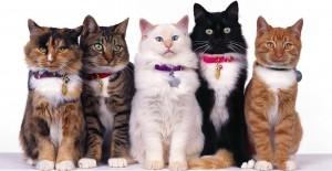 plantilla gatos