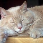 Cat Mate Elite Super Selective Cat Door – Full Review