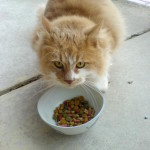 Dry, Wet or Raw Cat Food? What's The Ideal Diet For Your Feline Friend?