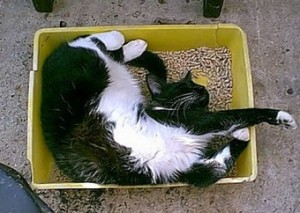 Cat resting in its litter box.