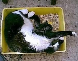 Cat resting in its litter box