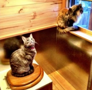 Cats sharing territory