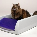How To Get Your Cat To Adopt A Top Automatic Litter Box
