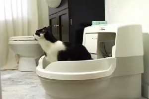 Cat & the CatGenie