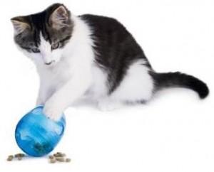 eggcat
