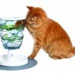 Cat Amazing Treat Maze & Puzzle – Full Review