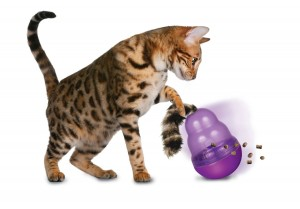 Cat Playing with Kong Wobbler