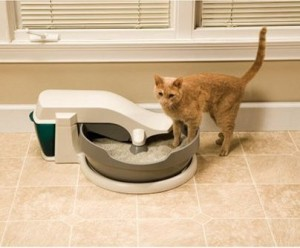 Cat with PetSafe Simply Clean Continuous-Clean Litter Box