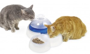 Catit Water Fountain for Cats Review