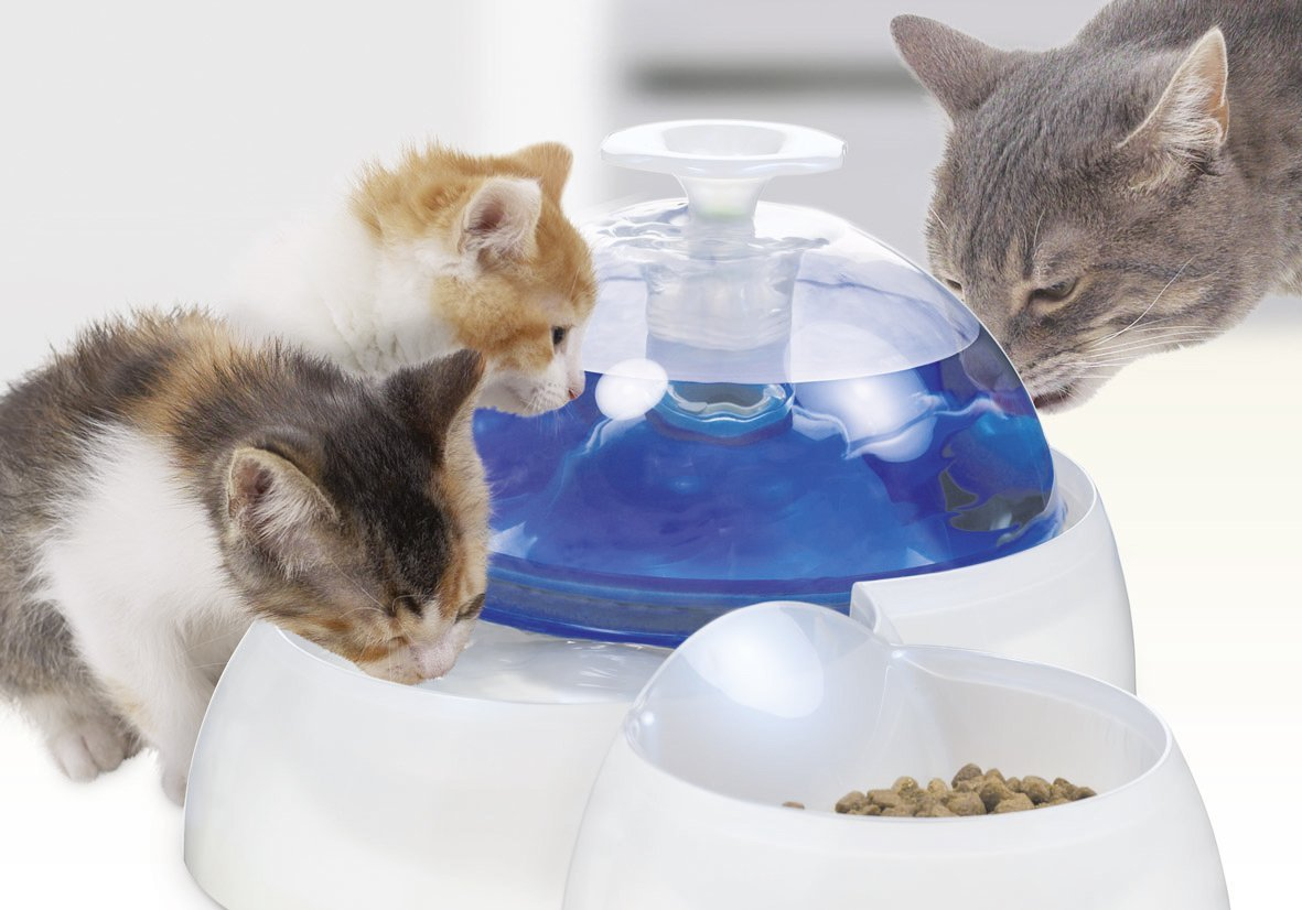 Cat Drinking Fountain Reviews