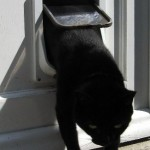How Do Automatic Cat Doors Work?