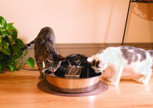 Cats drinking from Drinkwell Zen Steel Fountain