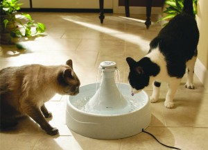Cats drinking from the Drinkwell 360