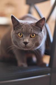 Cat ready