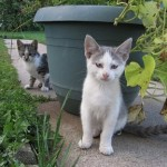 How to Choose the Best Automatic Litter Box for Multiple Cats
