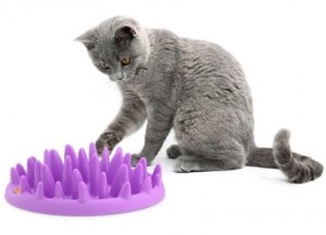 Northmate Interactive Slow Pet Feeder for Cats – Full Review