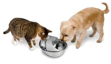 Cat and dog drinking from Pioneer Stainless Steel fountain