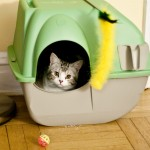 When Self Cleaning Litter Boxes May Not Work For A Cat