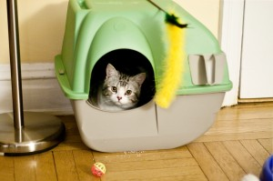 When A Self Cleaning Litter Box Isn't Suitable For A Cat