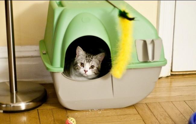Kitten in a self-cleaning Litter Box