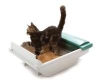 Cat using Pet Zone Smart Scoop Litter Box