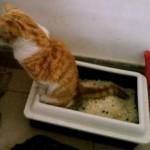 Best 8 Automatic Cat Litter Box Comparison Chart