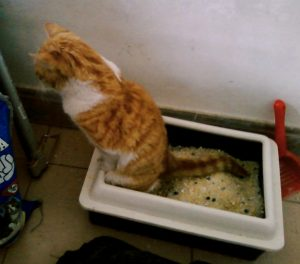 Cats Not Using The Litter Box: Causes and Tips To Resolve It