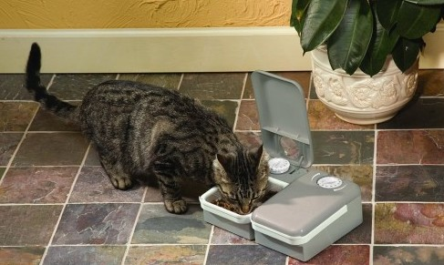 Cat eating from the Petsafe 2-meal