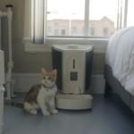 Pet Feedster Assembling and Programming