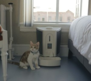 Cat and Pet Feedster