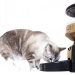 Tiger Diner Ceramic Cat Feeder – Full Review