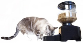 Cat eating from MOTA feeder