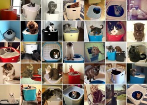 Cats using Modkat Litter Box