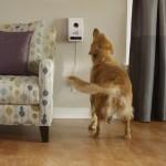 Petzi Treat Camera & Dispenser – Full Review