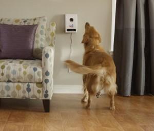 Petzi mounted on wall