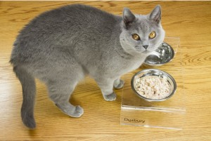 Cat with Duxury raised pet feeder