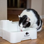KURMA Best Automatic Pet Water Fountain – Full Review