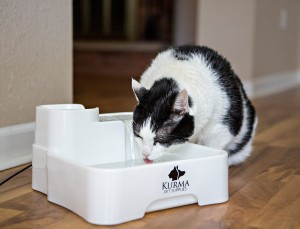Cat drinking from Kurma Best Automatic Pet Water Fountain