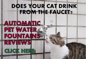 Cat drinking from the faucet