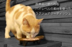 Cat eating from Wetnoz Ultra Fat Cat Dish