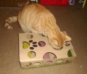 Cat Amazing Maze stimulates cats mentally