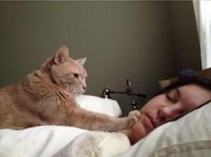 Cat waking up its human