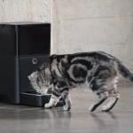Petnet SmartFeeder – Full Review