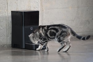 Cat eating from Petnet SmartFeeder