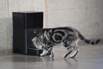 Cat eating from Petnet SmartFeeder