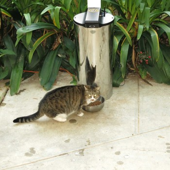 loss can help l white petnet smartfeeder automatic cats mechanism lose for blog cat feeders your feeder weight